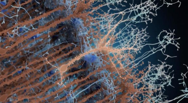 Новые нейроны