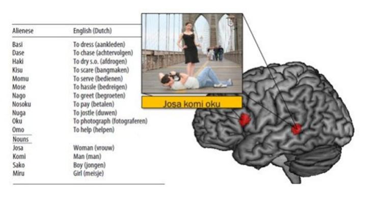 мозг и английский