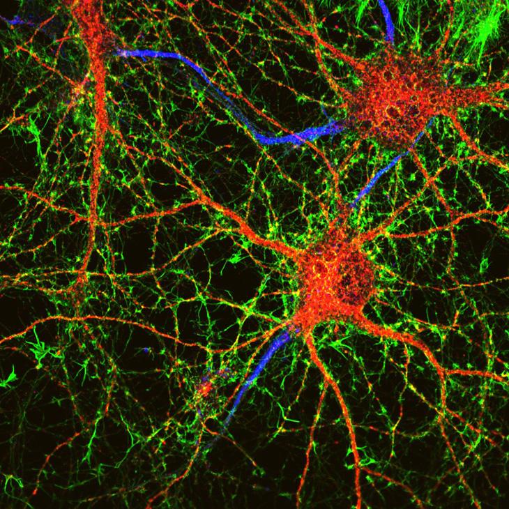 нейроны