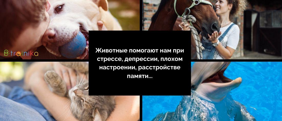 Влияние животных на человека